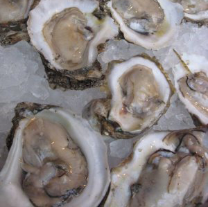 Louisiana Oysters on ice